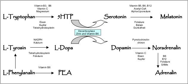 Serotoninsynthese Schema