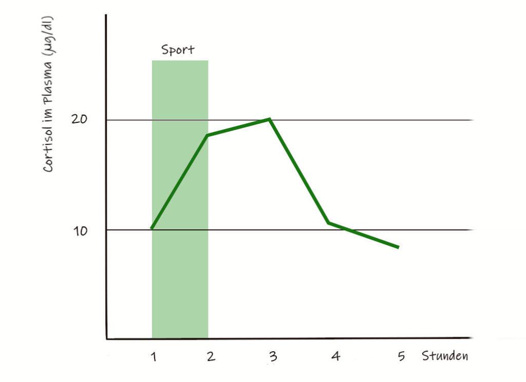 Verlauf der Cortisolkurve bei körperlicher Anstrengung