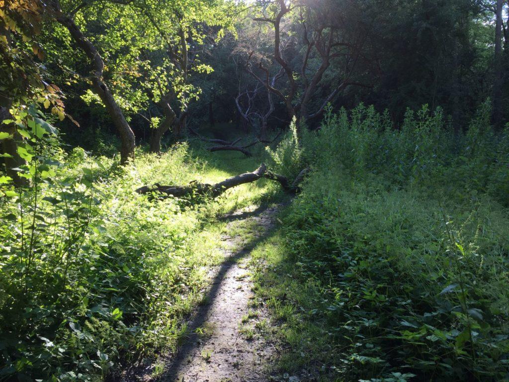 Waldweg mit Hindernissen