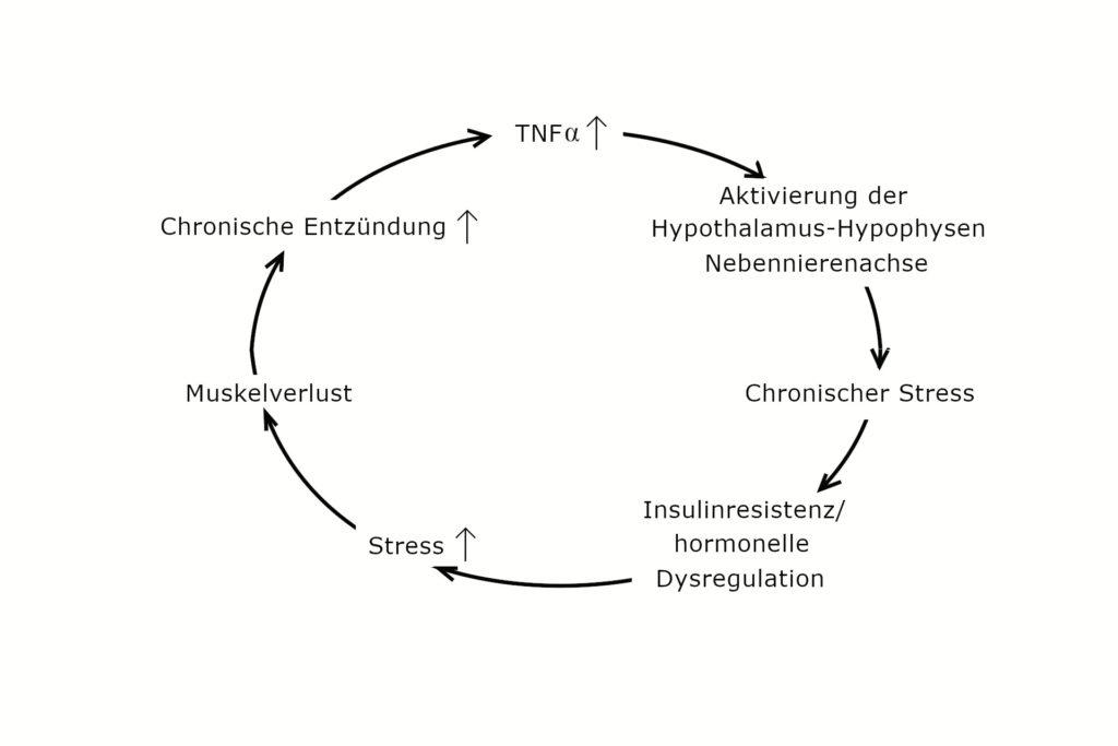 Teufelskreis der Entzündungsverstärkung
